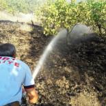 Siirt'te Fıstık Bahçesinde Çıkan Yangın Söndürüldü
