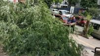 YAYA GEÇİDİ - Kırılan Ağaç Yolu Kapattı