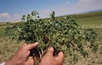 İLAÇ PARASI - (Özel ) Karaborsaya Düşen Zirai İlaç, Çiftçinin Belini Büküyor