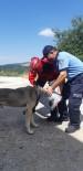Başına Teneke Sıkışan Köpeği İtfaiye Kurtardı