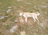 Bingöl'de 4 Çoban Köpeğinin Vurulduğu İddiası