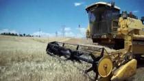 Devlet Desteğiyle Ekmeğini Buğdaydan Çıkarıyor