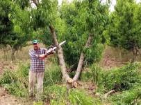 (Özel) Bursa'da Kesilen Meyve Ağacı Sayısı 60 Bine Ulaştı, O Anlar Havadan Görüntülendi