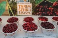 Amasya'da Kirazlar Yarıştı