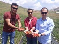 AYRANCıLAR - Çaldıran'da Yerli Çilek Üretimi İkinci Yılında