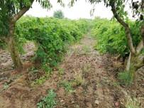 AŞIRI YAĞIŞ - Turgutlu'da Sağanak Yağış Tarım Arazilerini Vurdu