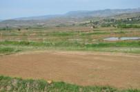 HİDROELEKTRİK - Kızılırmak Havzasında Çeltik Arazileri Susuzluktan Kurumaya Başladı