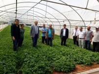 SEMIZOTU - Trabzon'da Örtüaltı Üretimin Kalbi Akyazı
