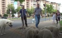 SOKAK KÖPEĞİ - Evine Götüreceği Sütü Sokak Köpeklerine İçirdi