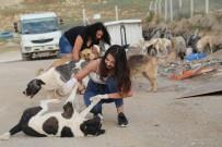 SOKAK KÖPEKLERİ - Kimsesiz Köpekleri Sevgiyle Besliyorlar