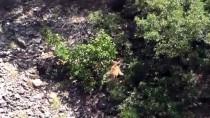 Tunceli'de Boz Ayı Ve Dağ Keçisi Görüntülendi