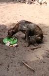 Antalya'da Korkunç Olay Açıklaması Köpekleri Çuvala Koyup Ölüme Terk Ettiler
