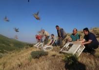 Elazığ'da Bin Keklik Doğaya Salındı