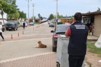 SOKAK KÖPEKLERİ - Tatil Beldelerindeki Sokak Köpeklerine Sağlık Denetimleri