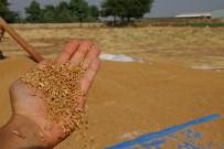 30 Ton Buğday Yüklü Tırla Kayıplara Karıştı