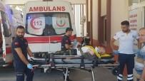 Antalya'da  Erik Ağacından Düşen Yaşlı Şahıs Yaralandı