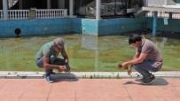 HINT KENEVIRI - Havuz Başını Kenevir Tarlasına Çevirdi