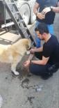 SOKAK KÖPEĞİ - (Özel) Polis Memurları Susayan Köpeğe Elleriyle Su Verdi