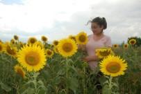 Sarıya Boyanan Tarlalar Doğa Tutkunlarını Cezbediyor