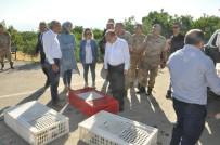 Şırnak'ta Doğaya 2 Bin Keklik Salındı