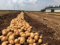 YERLİ TOHUM - Yerli Ve Milli Patates Nahita'da Hasat Başladı