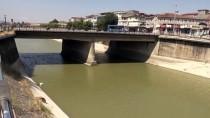ORMAN MÜDÜRLÜĞÜ - Asi Nehri'nde Balık Ölümleri