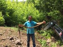 KANALİZASYON - İçme Suyu Hattından Çıkan Kunduz Şaşırttı