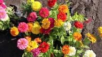 Iğdır'da Yetiştirilen Çiçekler Cumhurbaşkanlığı Külliyesi'ni Süsleyecek