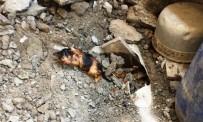 KANALİZASYON - Kanalizasyon Borusuna Sıkışan Yavru Kediyi İtfaiye Kurardı