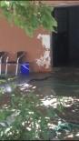 Antalya'da Evden Çıkan 2 Metrelik Yılan Paniğe Sebep Oldu