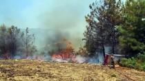 Antalya'da Makilik Ve Ormanlık Alanda Yangın