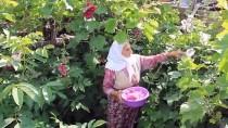 SOĞUK ALGINLIĞI - Hatmi Çiçeğinin 'Şifa' Yolculuğu