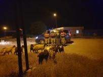 Kaybolan Koyunları Jandarma Buldu