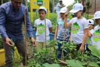 ORGANİK MEYVE - 'Benim Bahçemin' İlk Ürünleri Fide Vermeye Başladı