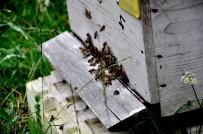 Başkan Elevli; 'Zamansız Külleme İle Mücadele Arıların Ölümüne Neden Oluyor'