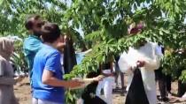 Elazığ'da Kiraz Hasadı Şenliği
