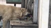 SOKAK KÖPEĞİ - Musluktan Su İçen Köpek İlgi Odağı Oldu