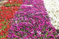 Üniversitede Yetiştirilen Çiçekler Külliye'yi Süsleyecek