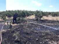 Yangın Ormana Sıçramadan Söndürüldü