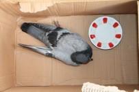 Yaralı Güvercine Vatandaşlar Sahip Çıktı
