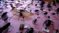25 Yılda 3 Bin Böcek Topladı
