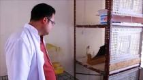 Siirt'te Yaralı Kartal Tedavi Altına Alındı