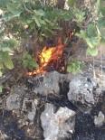 Sincik İlçesinde Orman Yangını