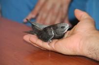 Yavru Ebabil Kuşuna Doktor Ve Hemşireler Sahip Çıktı