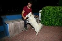 Eskimo Cinsi Köpeğin Dondurma Aşkı