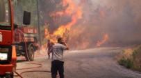 HEYBELIADA - Heybeliada'da yangın paniği!