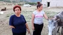 Kanser Hastası Eşine Eşek Sütü Elde Etmek İçin Çiftlik Kurdu