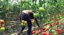 Kurduğu Serayla Mevsimlik İşçilere Umut Oldu