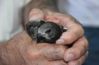 Yavru 'Ebabil Kuşu' Tedavi Altına Alındı