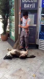 (Özel) Temizlik İşçisinden Köpeğe Masaj